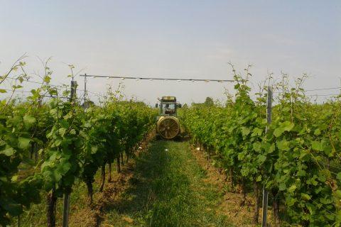 Spray mass balance in vineyard